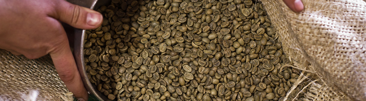 Green Coffee Beans ready to be roasted