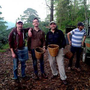 Staff of Zingerman's Coffee Company with baskets, picking coffee cherries in Honduras.